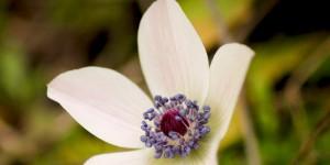 İda'nın Çiçekleri -98