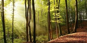 Ormanların Geleceği Ne Olacak?