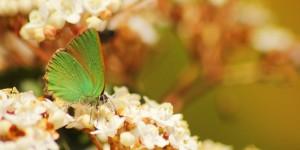 İda'nın Kelebekleri -15