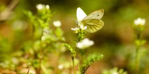 İda'nın Kelebekleri -6