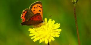 İda'nın Kelebekleri -8