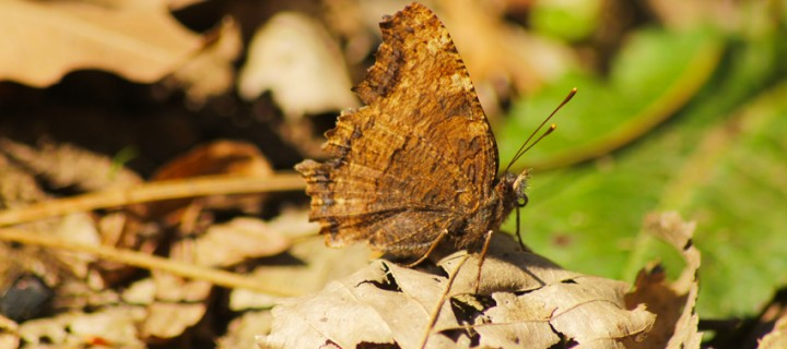 İda'nın Kelebekleri -9
