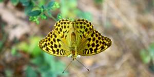 İda'nın Kelebekleri -11