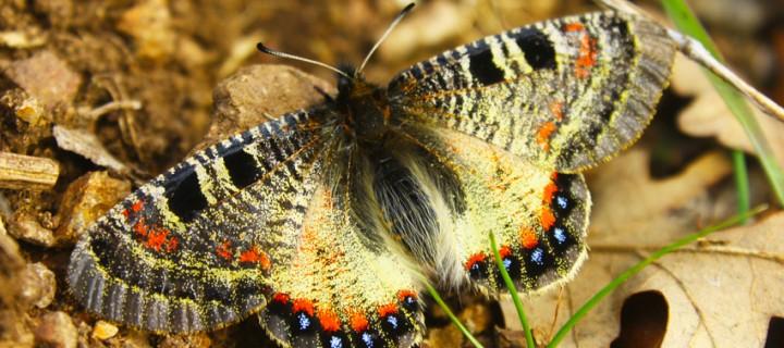 İda'nın Kelebekleri -12