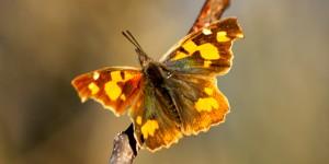 İda'nın Kelebekleri -13