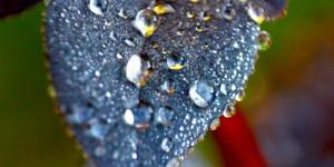 14 Nisan / Yağmur