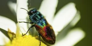 İda'nın Büyülü Canlıları -71