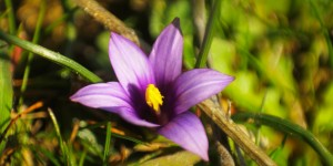 İda'nın Çiçekleri -123