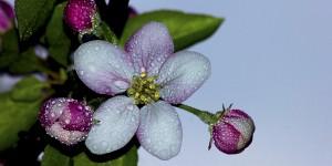 İda'nın Çiçekleri -129