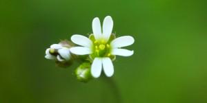 İda'nın Çiçekleri -136