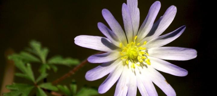 İda'nın Çiçekleri -137
