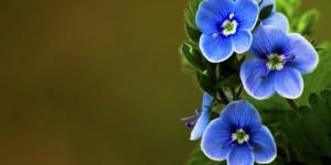 İda'nın Çiçekleri -138
