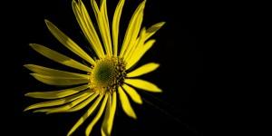 İda'nın Çiçekleri -140