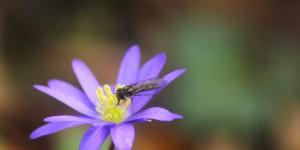 İda'nın Çiçekleri -115