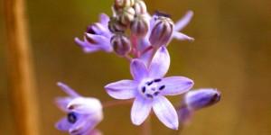 İda'nın Çiçekleri -118