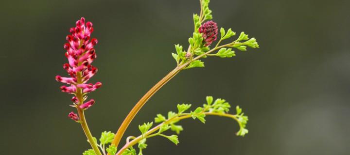 İda'nın Çiçekleri -119