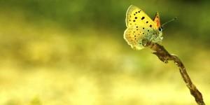 İda'nın Kelebekleri -34