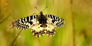 İda'nın Kelebekleri -16