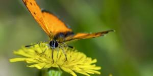 İda'nın Kelebekleri -27