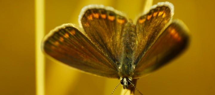 İda'nın Kelebekleri -29