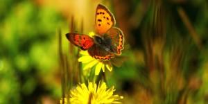 İda'nın Kelebekleri -30