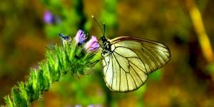 İda'nın Kelebekleri -31