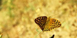 İda'nın Kelebekleri -32