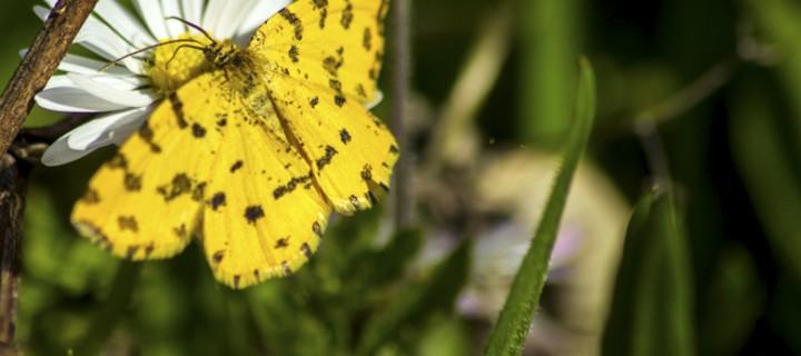 İda'nın Kelebekleri -36