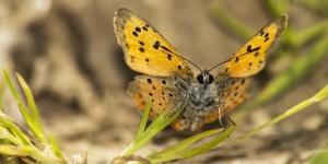 İda'nın Kelebekleri -37