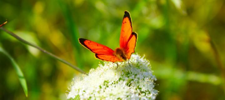 İda'nın Kelebekleri -40