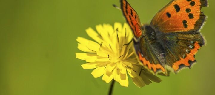 İda'nın Kelebekleri -18