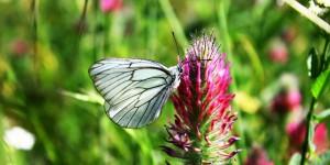 İda'nın Kelebekleri -41