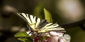 İda'nın Kelebekleri -43