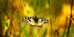 İda'nın Kelebekleri -46