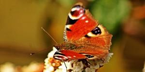 İda'nın Kelebekleri -45