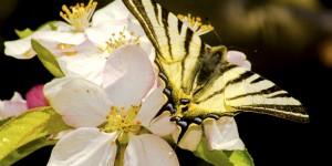 İda'nın Kelebekleri -19