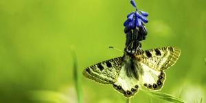 İda'nın Kelebekleri -24
