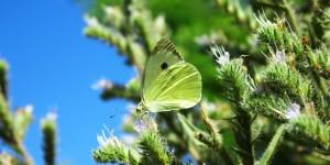 İda'nın Kelebekleri -25