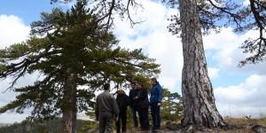Akdeniz Ormanlarının İklim Değişikliğine Uyumu Projesi Çalışmaları Devam Ediyor