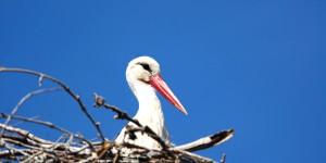 Apolyont Gölü'nün Gerçek Sahipleri; Leylekler -12