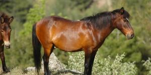 Beydağları'nın Yılkı Atları -14