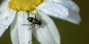 BÖFYAP Böcek Okulu Projesi Başlıyor