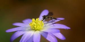 İda'nın Çiçekleri -142
