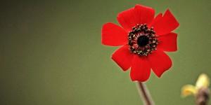 İda'nın Çiçekleri -165