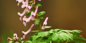 İda'nın Çiçekleri -147