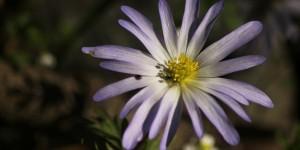 İda'nın Çiçekleri -171
