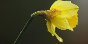 İda'nın Çiçekleri -144