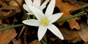 İda'nın Çiçekleri -149