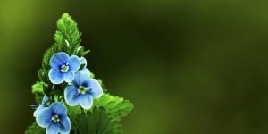 İda'nın Çiçekleri -152