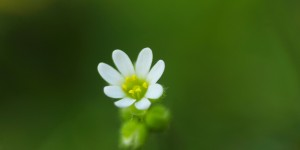 İda'nın Çiçekleri -158